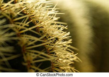 Cactus Thorn Close up III