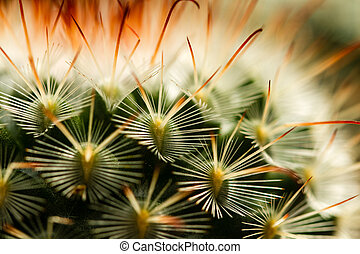 Cactus Thorn Extreme Close up III