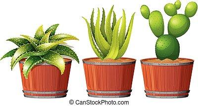 cactus, vaso, crescente