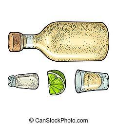 cactus, vecteur, botlle, lime., gravure, vendange, tequila., couleur, verre, sel