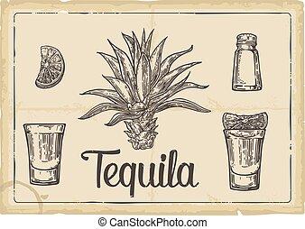cactus, verre, tequila., chaux, sel, botlle