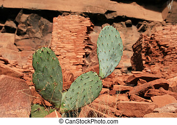 cactus with indian ruins - cactus with Honanki Sinaguan ...