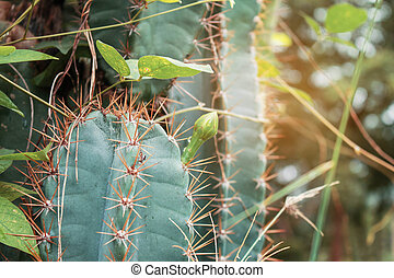 Cactus with sunlight.