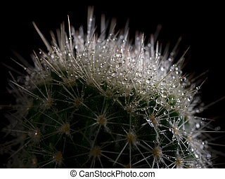 cactus with water droplets, on black background
