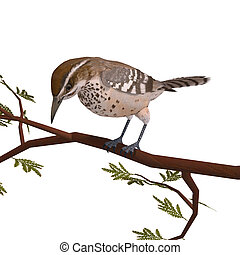 Cactus Wren. 3D rendering with clipping path and shadow over...