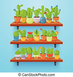 Cactuses and succulents in flower pots on shelves. Home cactus plants with prickles and flowers. Exotic tropical collection of various succulents