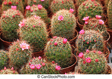 cactuses as nice natural background