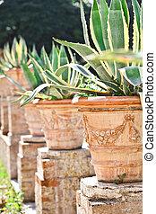 cactuses in a tropical garden