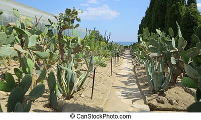 Cactuses in botanical garden