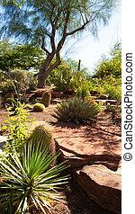 Cactuses in Desert Garden Under Tree