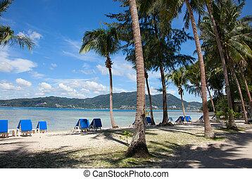 cadeiras, praia, árvores, palma, convés