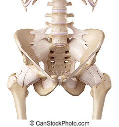 cadera, ligamentos