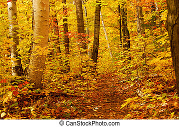 cadere, foresta
