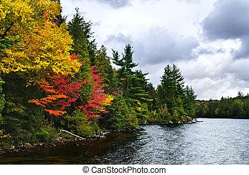 cadere, foresta, e, riva lago