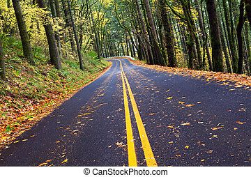 cadere, sinuosità, foresta, strada montagna
