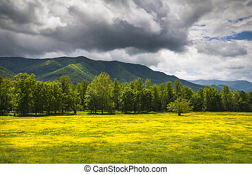 Cades Cove Spring Flowers Great Smoky Mountains National Park Fields with dramatic sky and Appalachian mountain peaks