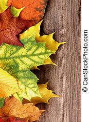 cadre, érable, pousse feuilles