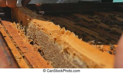 cadre, apiculteur, miel, hive., récupérations directes, dehors