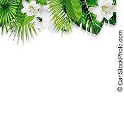 cadre, exotique, branche, fleurs blanches, lis, feuilles