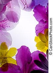 cadre, fleur, violet