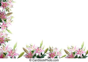 cadre, fleurs, lis, composition
