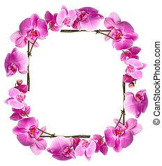 cadre, fleurs, orchidées