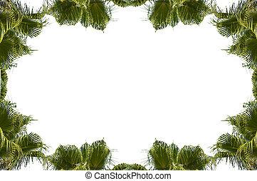 cadre, paume, deux, arbres, bambou