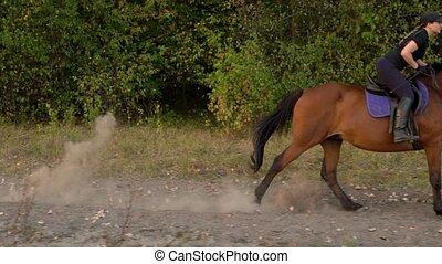 cadre, sunset., cheval, équitation, galop, motion., lent,...