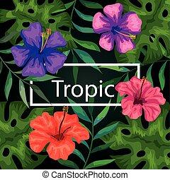 cadre, tropique, fleurs, pousse feuilles