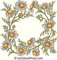 cadre, vecteur, camomille, fleur