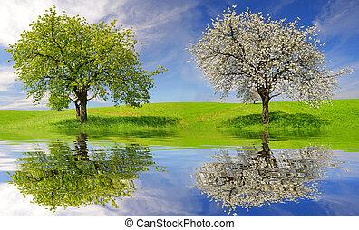caduco, y, árbol floreciendo