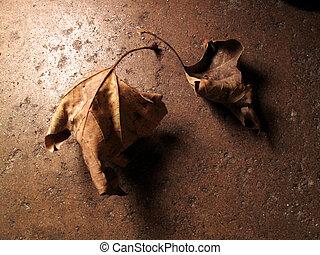 caduto, autunno parte