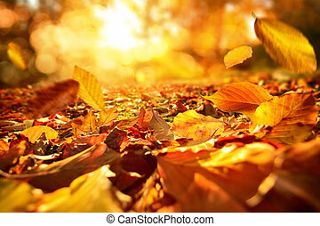 caer, otoño sale, en, animado, luz del sol