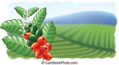 café, árvore., flores, frutas
