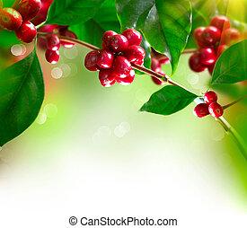 café, plant., rama, de, un, árbol de café, con, maduro,...