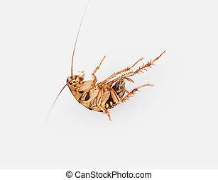 arri re plan blanc mort cafard image de stock recherchez photos et clipart csp8149106. Black Bedroom Furniture Sets. Home Design Ideas