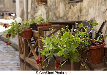 Cafe on the street. Red flowers in pots