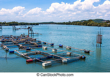 Cage aquaculture farming, Thailand