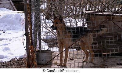 cage, arrière-cour, winter., chien, aboiements, garde