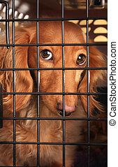 cage., chien