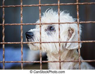 cage, chien