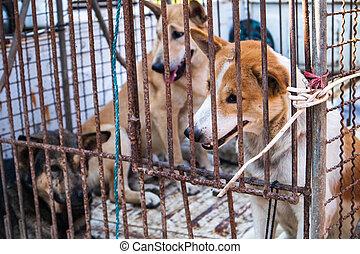 cage., chien, piégé