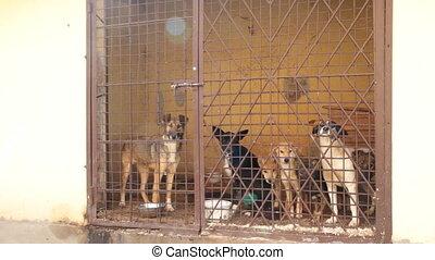 cage, chiens