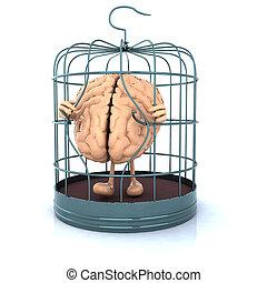 cage d'oiseaux, évasion, cerveau