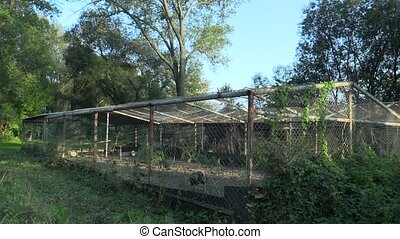 Cage for extensive breeding of turkeys Meleagris, pheasants,...