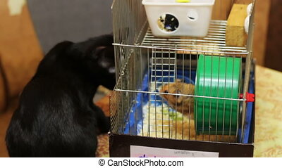 cage, noir, hamster, chat