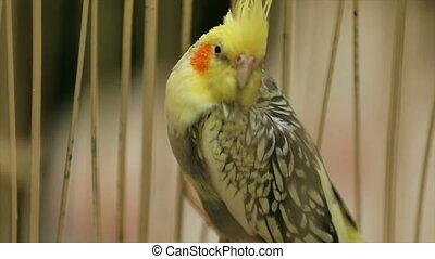 cage, perroquet