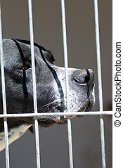Caged Dog - Dog with a sad expression in his cage