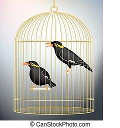 Caged myna birds - Editable vector illustration of a pair of...