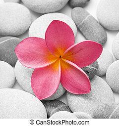 cailloux, fleur, séduisant